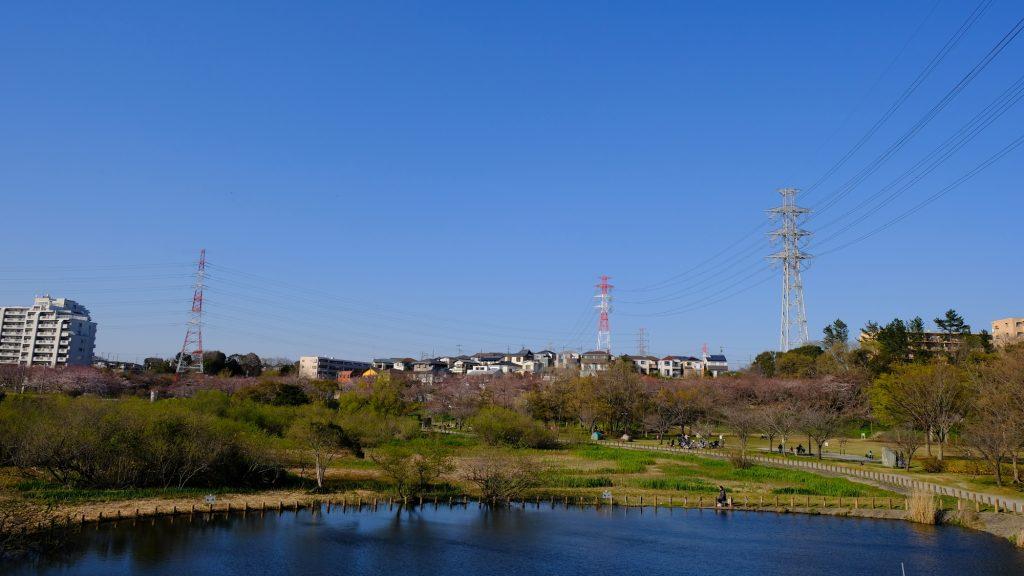 千葉県船橋 長津川親水公園 お散歩2