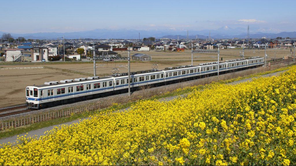 東武8000系試運転列車と菜の花土手